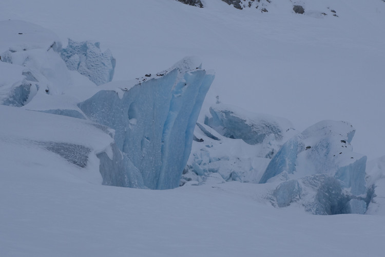 Die Gletscher reichen bis auf 300 meter Meereshöhe