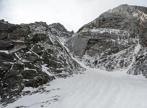 Wildgall - Seltene Erden (M4/V+)