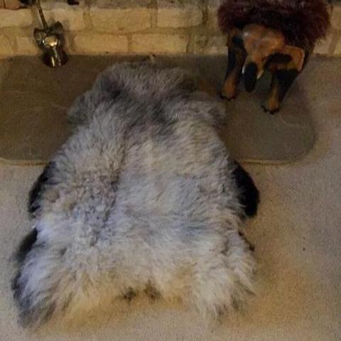 Shetland sheepskin, grey katmoget.