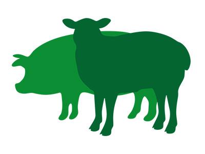 Schwäbisch-Hällisches Bio-Landschwein und Lammfleisch | Hofladen geöffnet von 10-12 Uhr