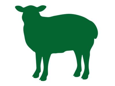 Frisches Bio-Lammfleisch von unseren Lämmern