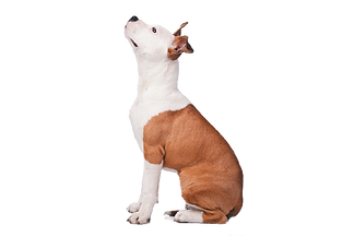 Attentive-dog-looking-up_edited.png
