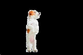 little-dog-studio-looking-up-portrait-pe