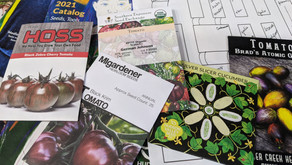 Favorite Seed Companies to Find Organic Rare Seeds
