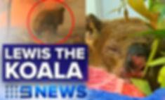 Lewis the koala_edited_edited_edited.jpg