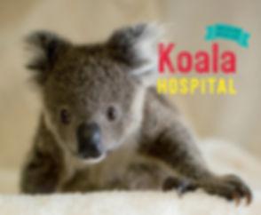 Koala hospital.jpg