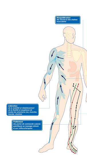 Ostéothérapie HVB.png