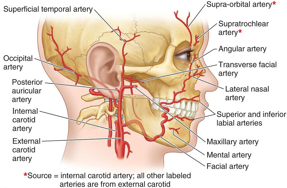 Facial Vessels and Arteries