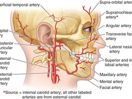Non-Surgical Thread Lifting: Understanding Facial Anatomy, How to Avoid Vessel Damages and Prevent N