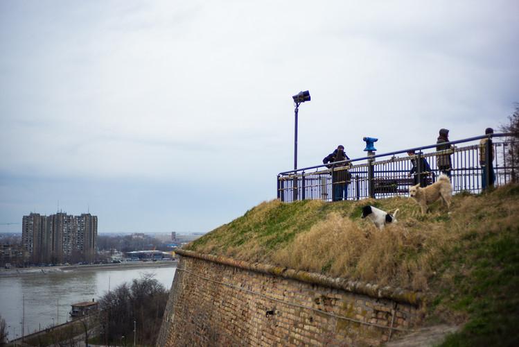 Dog Hill - Serbia