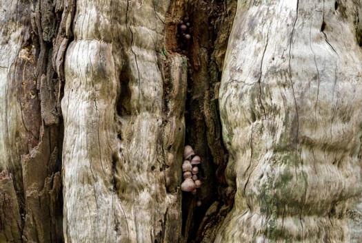 Fungi Layers