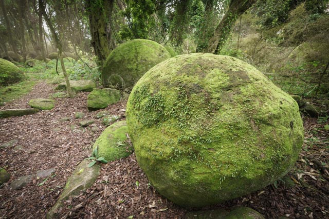 Moss Concretions
