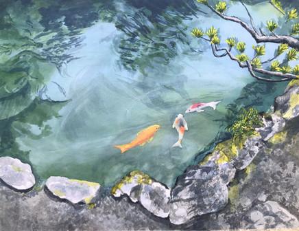 Koi Pond, Kyoto