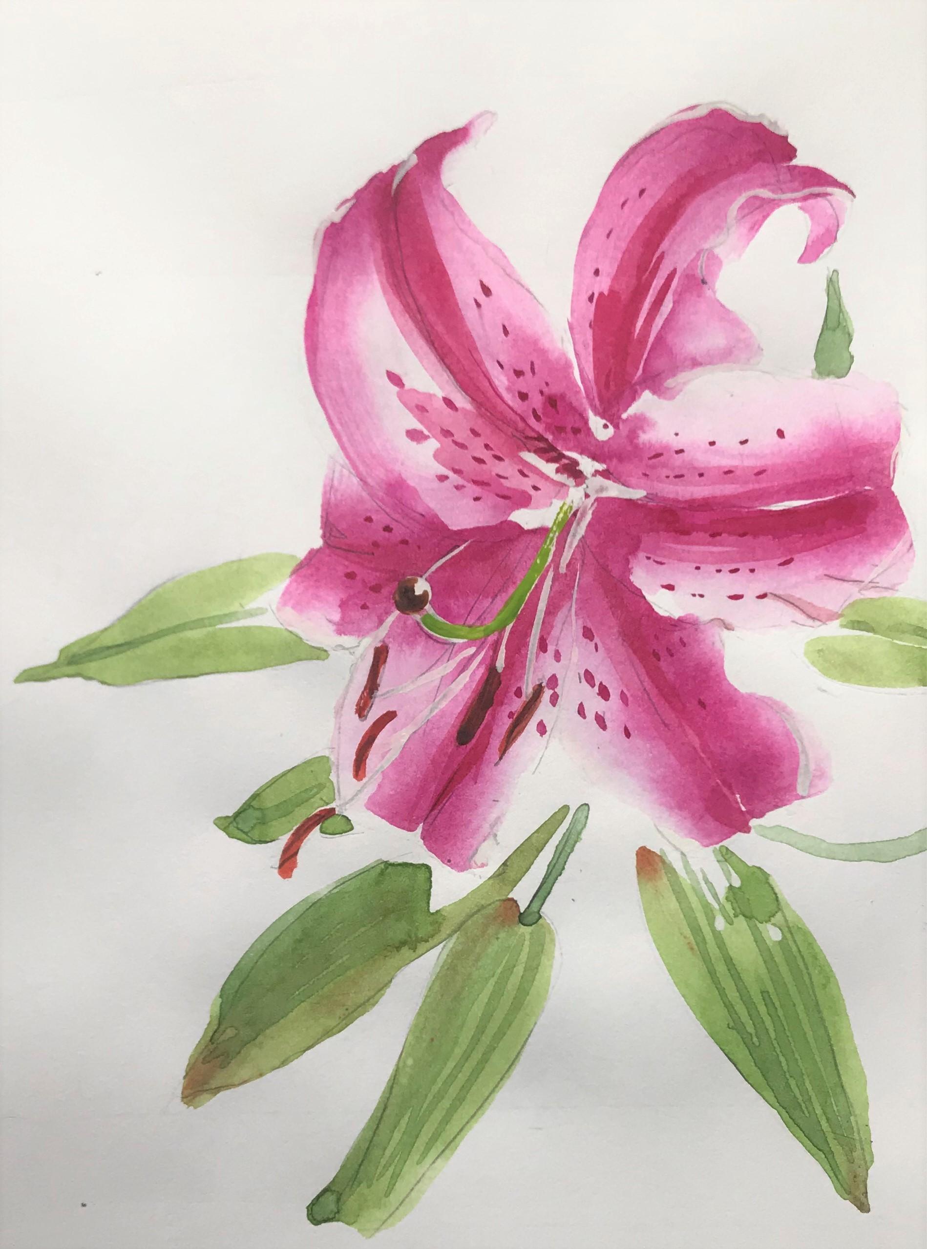 Naomi Wilsey Art