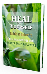 Heal Yourself HERBS cover 3d.png