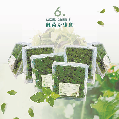 沙律菜 • 水耕菜 (900g) 六盒 6 BOXES of MIXED GREENS