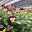 Thumbnail: 食用花 17-20g Edible flowers