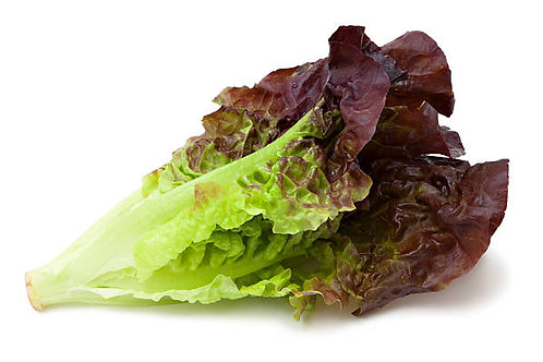 150g 紅葉萵苣 RED LEAF LETTUCE