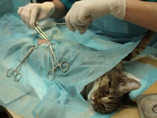 Cirurgias veterinárias podem ser suspensas para reduzir uso de insumos no Brasil
