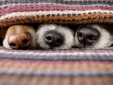 Cuidados com os animais devem ser redobrados no frio intenso
