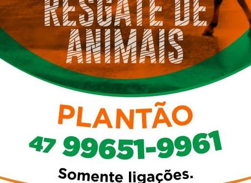 Camboriú tem serviço de resgate de animais de grande porte abandonados em via pública