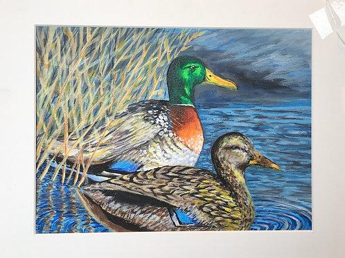 """Mallard Ducks by Chris """"C. J."""" Falkavage"""