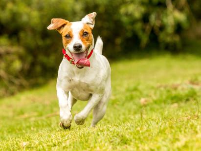 4 Dicas para deixar seu cão feliz
