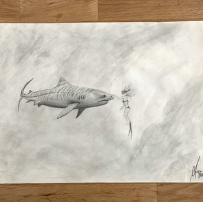 Shark and diving woman