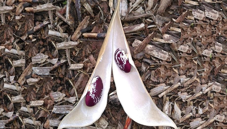 graines et plantes fête de pruines