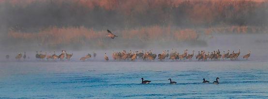 1 birding sub box pic.jpg
