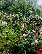 garden-vines.jpg