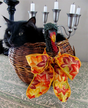 cat in a turkey