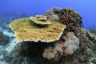 Rimba-Villas-Gili-Air-Corals.jpg