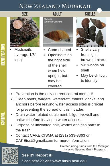 New Zealand Mudsnail Identification