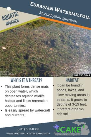 Eurasian Watermilfoil Description