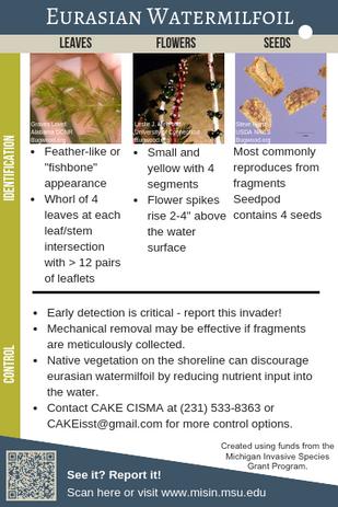 Eurasian Watermilfoil Identification