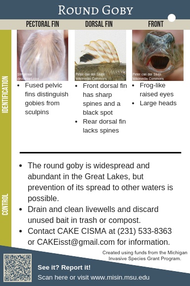Round Goby Identification