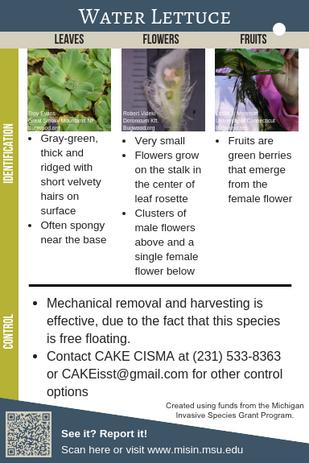 Water Lettuce Identification