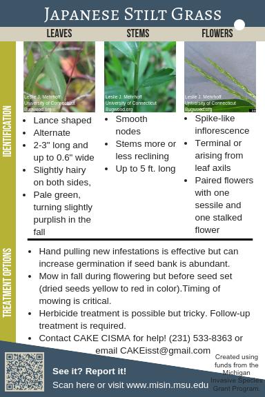 16 Japanese Stiltgrass Identification