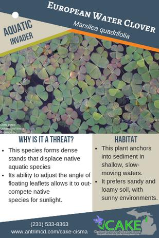 European Water Clover Description