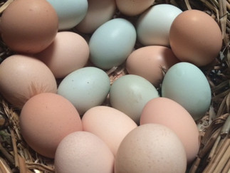 Not All Eggs are Created Equal - Learn About the Benefits of Organic Eggs
