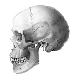 SkullScanLevelled.png