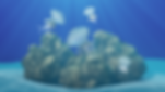 White-spotted-Jellyfish-Website.png