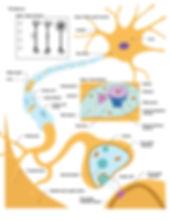 Neuronv001-01.jpg