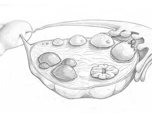 Ovary Tissue Landscape