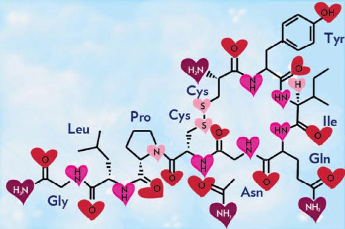 La-hormona-del-amor.jpg