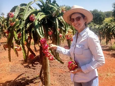 Rose Helen, uma mulher empreendedora e visionária à frente da Citrovan