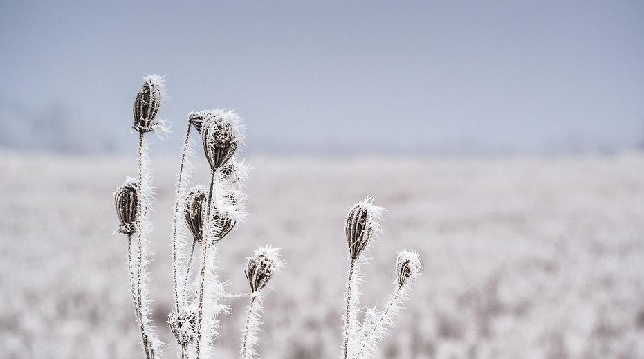 frost-gefroren-kalt-8788.jpg