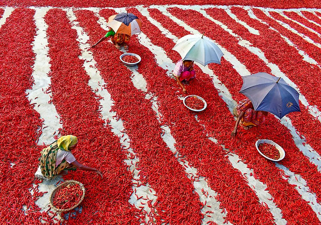 4_CATERS_CHILLI_FARMS_01-1024x717.jpg