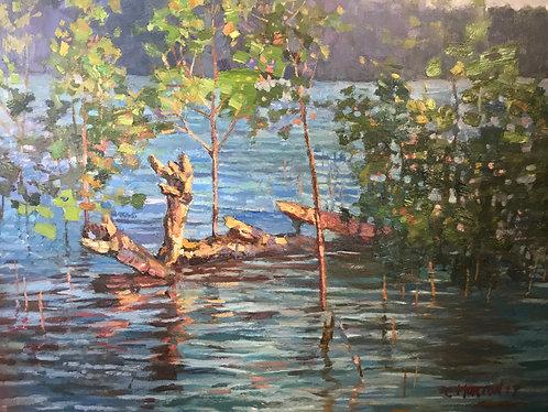 Shallow Lake High Water